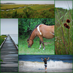 Collage of Assateague Island