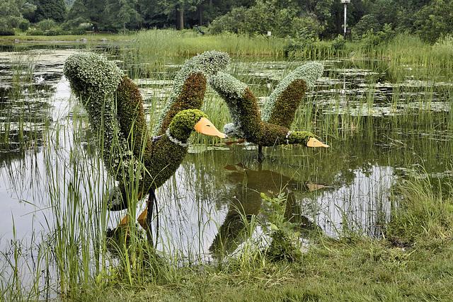 Mallard Ducks – Mosaïcultures Internationales de Montréal, Botanical Garden, Montréal, Québec