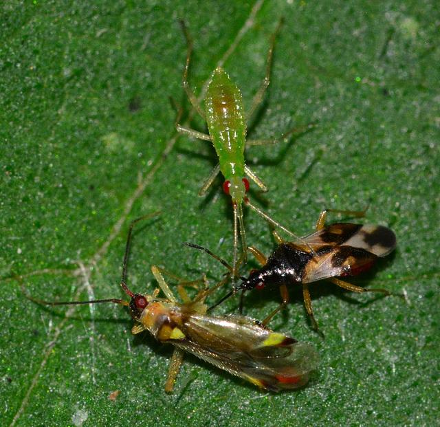 Bug Battle!!!