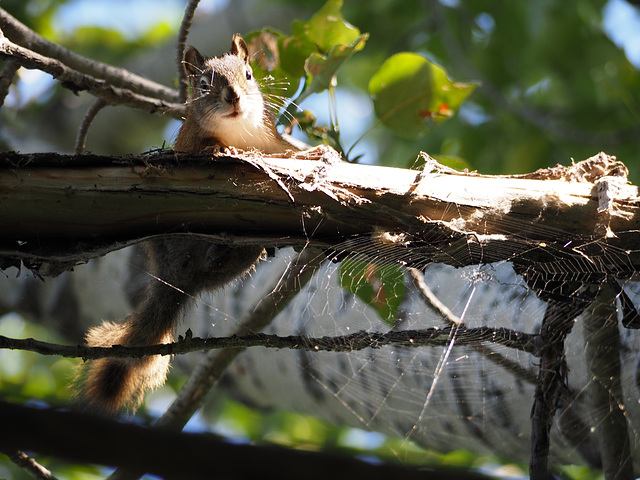 Squirrel Web on a Bright Sunny Day