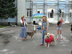 Истории собак
