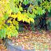 Autumn in Our Garden.