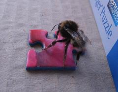 Die neugierige Biene