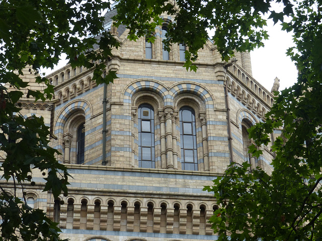 Natural History Museum (4) - 2 August 2014