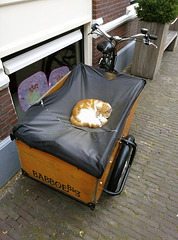 Freight bike carrying a cat
