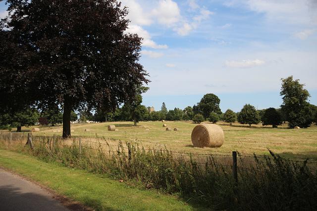 Woolverstone Hall Park, Suffolk