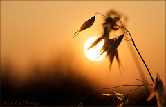 Contemplação de insecto, contemplation d'insecte, insect contemplation