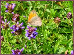 Les papillons sont comme nous, ils sortent avec le soleil ! [ON EXPLORE]