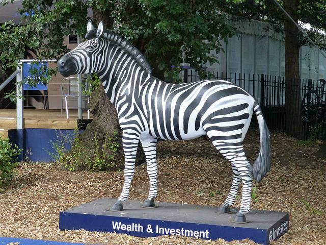The Investec Zebra - 1 August 2014