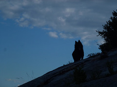 20140712 Fee Mt Baudille (9) al