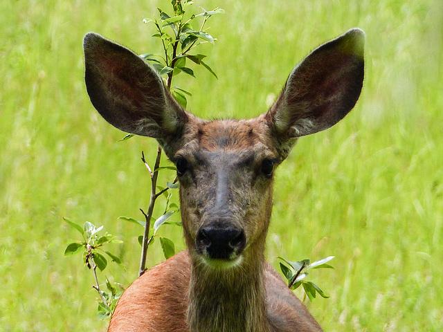 Love those ears