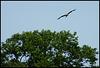 kite at Medley