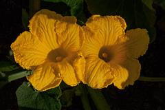 1-10 Project: 2 Pumpkin Flowers