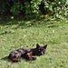 Blackie as a Kitten