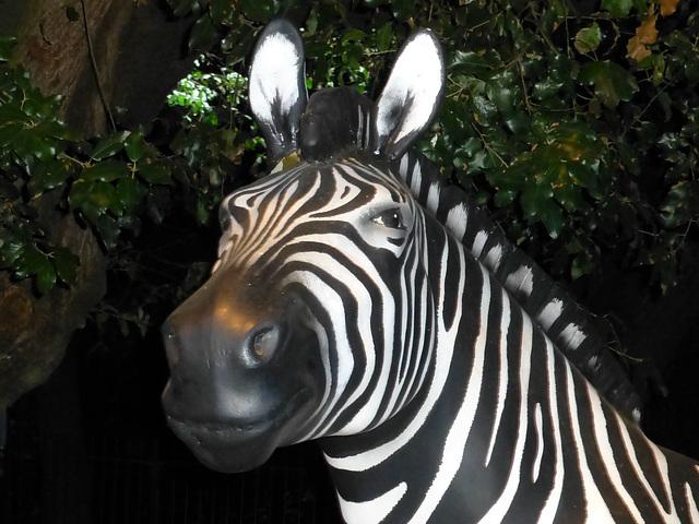 The Investec Zebra (2) - 2 August 2014