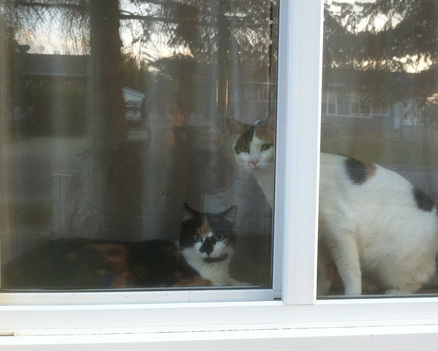 Callie and Simi