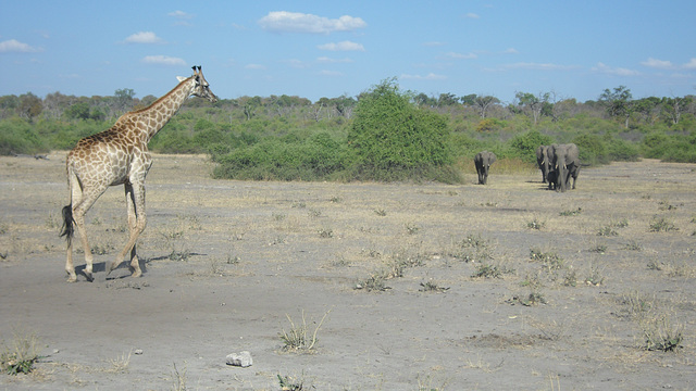 Shift Change in Chobe National Park