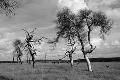 Treeparade