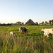 A la campagne près de Zutphen