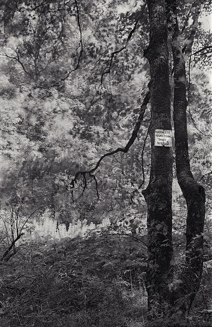 Derbyshire Wye - Topley Pike Wood