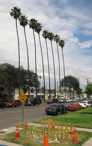 Palms (0222)