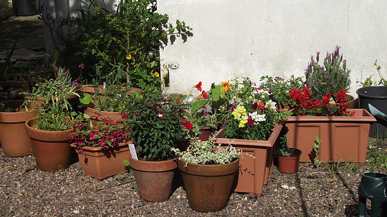 Some of the pots