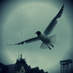 #gull