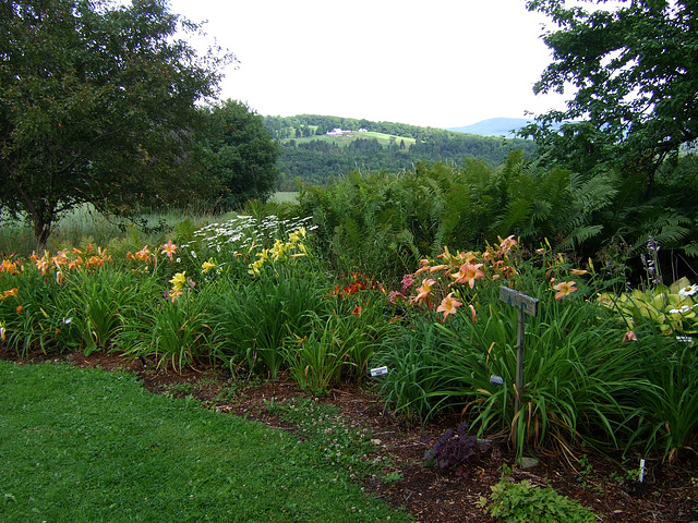 Daylily Farm, Northeast Kingdom #1