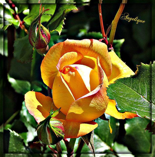 Bonne journée et bonne semaine mes Ami(e)s ! merci à tous !