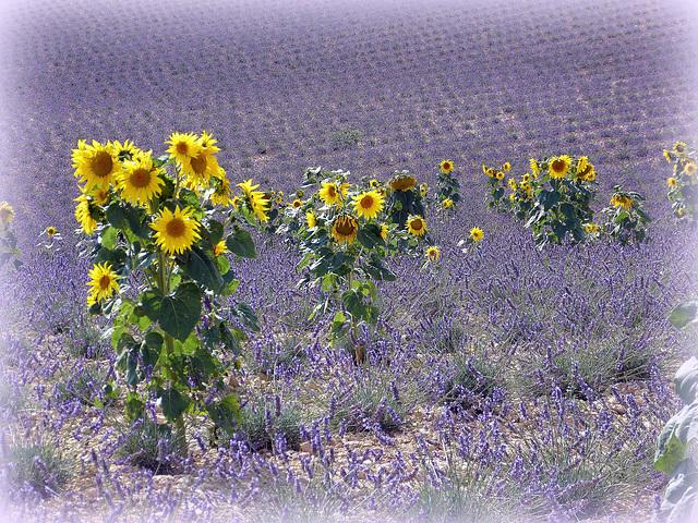 ...couleurs de Provence...