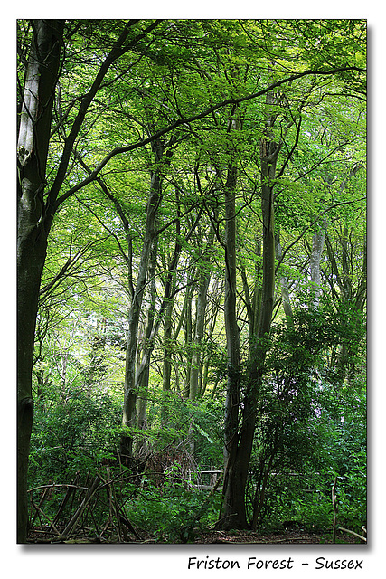 Friston Forest - Sussex - 7.7.2014