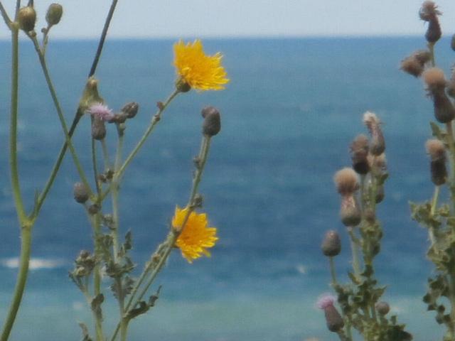 More wildflowers on the cliffs