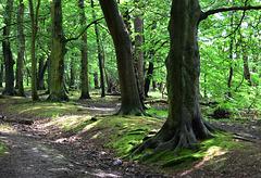 Gosforth Woods,Newcastle