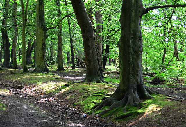 Gosforth Woods,Newcastle