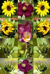 Sommerblumen. ©UdoSm