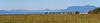 Panorama from Reifel Bird Sanctuary