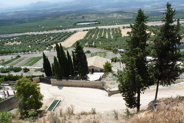Baeza rodeada de olivares