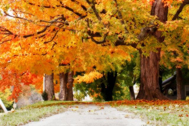 Fall Tree Detail