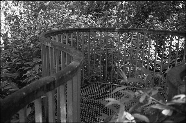 Walkway, R. Wandle nr Plough Lane.