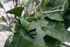 Caterpillar at NHM - 2 August 2014