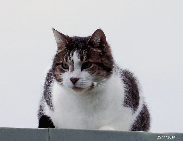 Max (Cat On A Cold Tin Roof!)