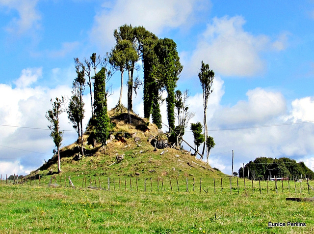 Tree Covered Mound