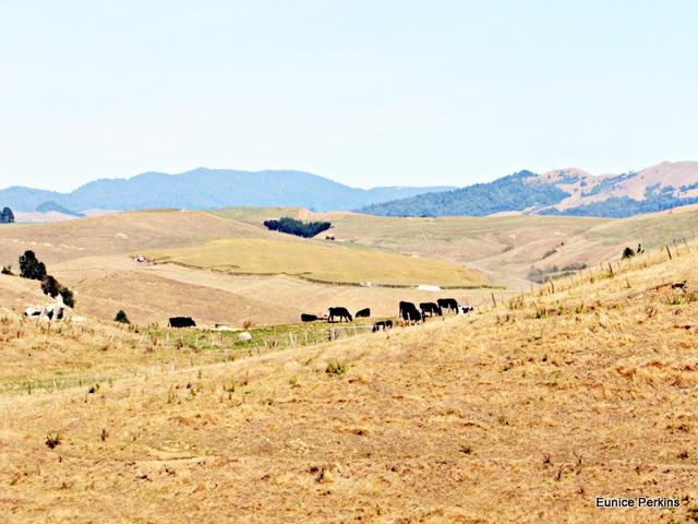 Drought near Ngaroma