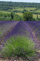 Drôme provençale -