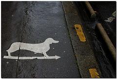 Achtung: Hund quert