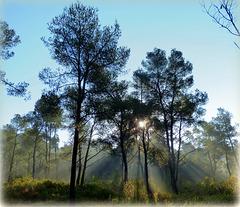 ...magie de la forêt...j'y rencontre fréquemment des sangliers ...à 5kms de la ville...