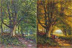 Bonomi Edward Warren: Variations on Trees and Shadows