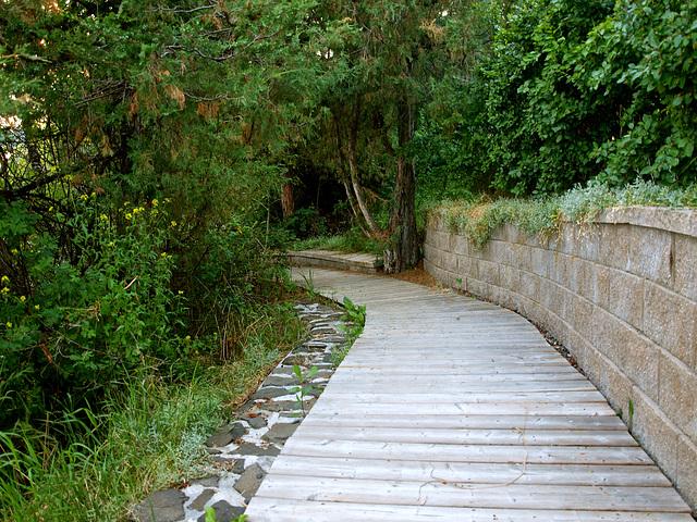 Walkway to the lake.