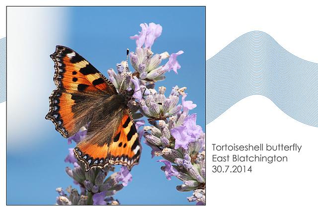 Tortoiseshell butterfly - East Blatchington - 30.7.2014