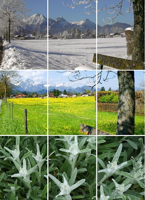Schwangau im Winter und im Frühjahr mit Edelweiß. ©UdoSm